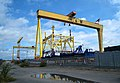 The most famous cranes in Belfast - geograph.org.uk - 1451393.jpg