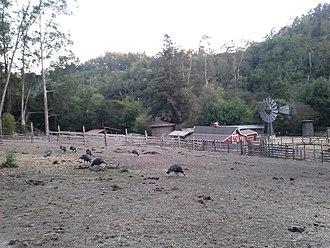 """Tilden Regional Park - The park has a small farm called """"The Little Farm"""" with various livestock"""