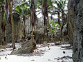Togo Chasm beach.jpg