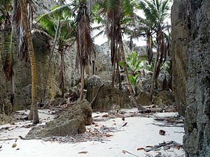 Coconut production in Niue - Niue landscape with coconut trees