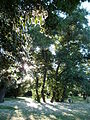 Toulouse - Jardin du Chardonnet.jpg