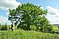 Tovstoluh-Kozatska-mogyla-i-Tovstoluzkyi-dub-14068492.jpg