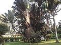 Travellers Palm.jpg