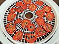 Tray of dried tomatoes.jpg