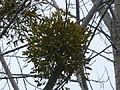 Tree 1240370.jpg