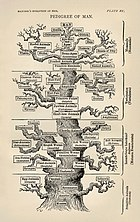 Tree of life by Haeckel