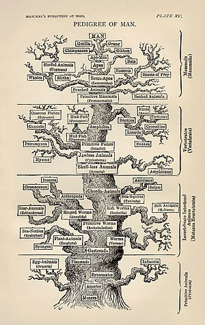 Biology - Ernst Haeckel's Tree of Life (1879)