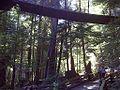 Tree top walk - panoramio (1).jpg