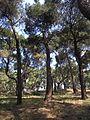 Trees - panoramio (9).jpg