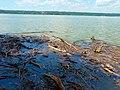 Treibholz im Ammersee (Floating timber debris) - geo.hlipp.de - 37260.jpg