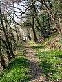 Trevaughan Woods - geograph.org.uk - 1239754.jpg