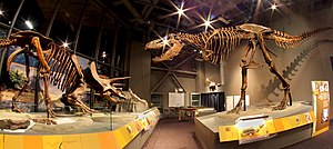 North Dakota Heritage Center - Image: Trex triceratops skeletons nd heritage center
