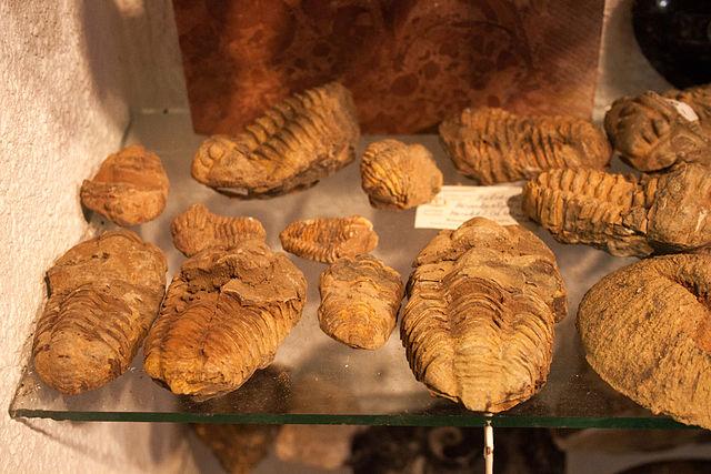 Skameneliny trilobitov