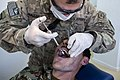 Trip to the dentist, How partnership builds a healthier Afghanistan 130414-A-GZ125-004.jpg