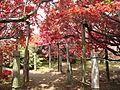 TsutsujiKoenTunnel.jpg