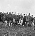 Twee koeien worden bekeken door boeren of veehandelaren, Bestanddeelnr 900-8552.jpg