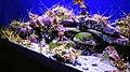 Two Oceans Aquarium July 2018 14.jpg