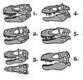 Tyrannosauridae skull comparison 01.JPG