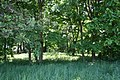 Tytlewo park dworski 2012 05 24 fot K Lewandowski 0599.JPG