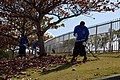 US Navy 090129-N-8490W-004 Sailors rake up leaves during a park clean-up community relations project at an Okinawan complex park.jpg