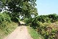 Upottery, Knackers Hole Lane - geograph.org.uk - 206339.jpg