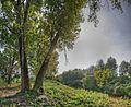 V - Santa Vittoria, Gualtieri (RE) Italia - 29 Settembre 2011 - panoramio.jpg