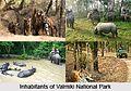 Valmiki National Park.jpg