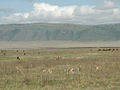 Various wildlife, Ngorongoro Crater.jpg
