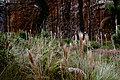 Vegetação e arenito 5.jpg