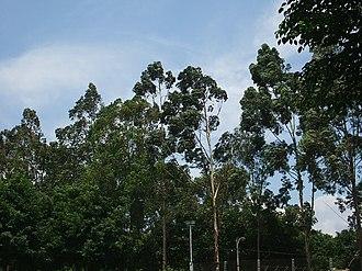 Hernandarias District - Vegetation in the area of Hernandarias