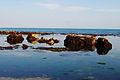 Ventnor Steephill Cove rocks.jpg