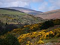 View up Laxey Glen to Snaefell - geograph.org.uk - 773842.jpg