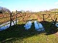 Vines, Carr Taylor Vineyard - geograph.org.uk - 344620.jpg