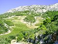 Vinohrady na jiznim svahu hvarskeho hrebene.jpg
