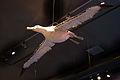 WLANL - kwispeltail - Albatros.jpg