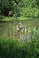 Wachtspaarbekken Bettelhovebeek 13.jpg
