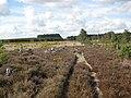 Wareham Forest Walk - Decoy Heath - geograph.org.uk - 1534532.jpg