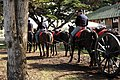 Warhorse Day, Jan. 30 (5405885956).jpg