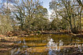 Warwickslade Cutting, surface water - geograph.org.uk - 1584415.jpg