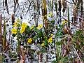 Wasserspiegelung gelbe Blüten.JPG