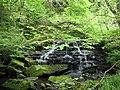 Waterfall in Dipton Wood, Hexhamshire - geograph.org.uk - 127815.jpg