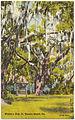 Wesley's Oak, St. Simons Island, Ga. (8343883872).jpg