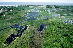 Wetlands Cape May New Jersey.jpg