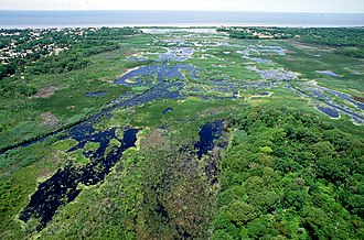 Cape May - Wetlands on Cape May