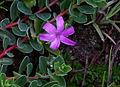 Whf purple 20.jpg