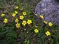 Whf yellow 07.jpg