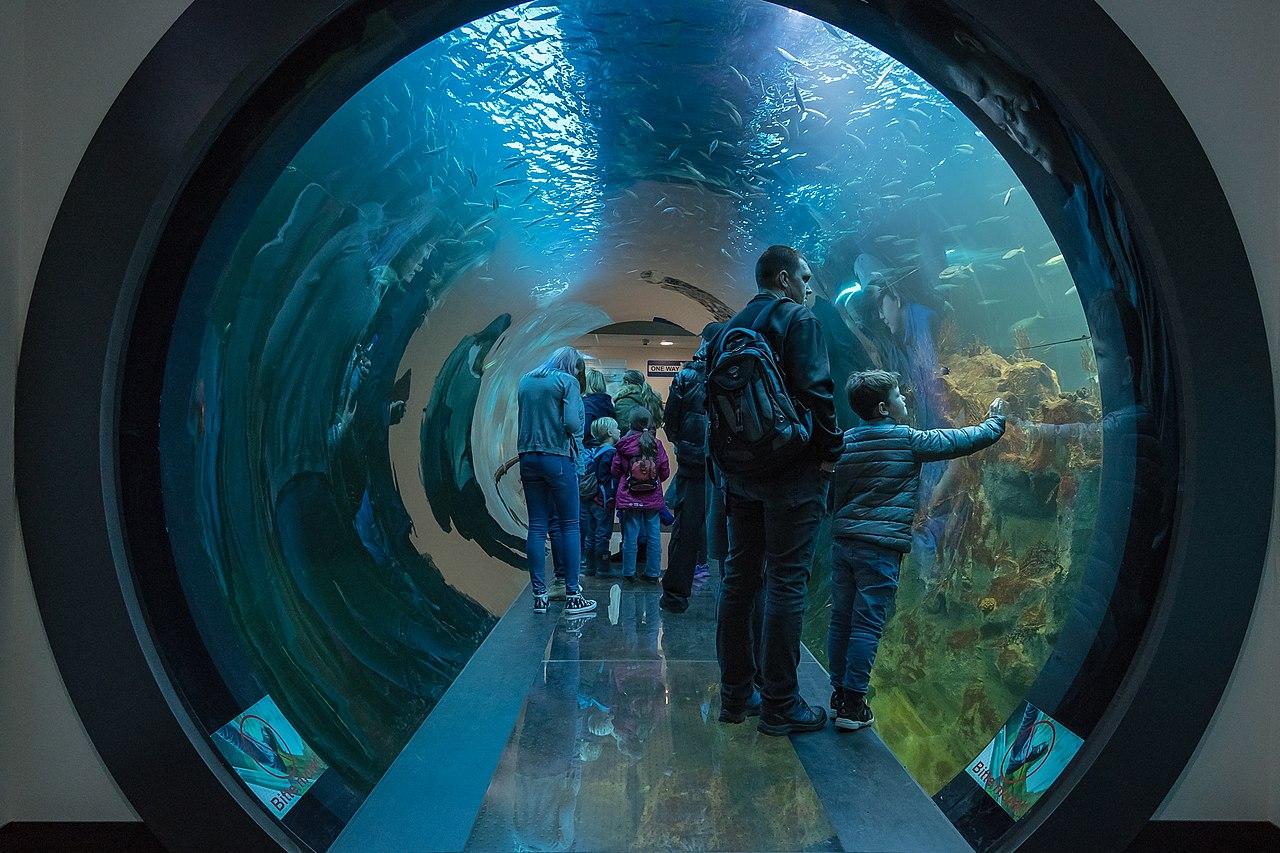 File Wien Haus des Meeres Atlantiktunnel 0877