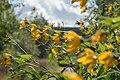 Wild flowers in a forest near Olgino 2020-09-13-1.jpg