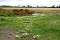 Wildflowers and a manure heap north of Willoughby - geograph.org.uk - 1425777.jpg