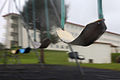 Wind from Typhoon Chaba blows around playground equipment at U.S. Marine Corps Base Camp Smedley D. Butler in Okinawa, Japan, Oct. 28, 2010 101028-M-VG363-088.jpg
